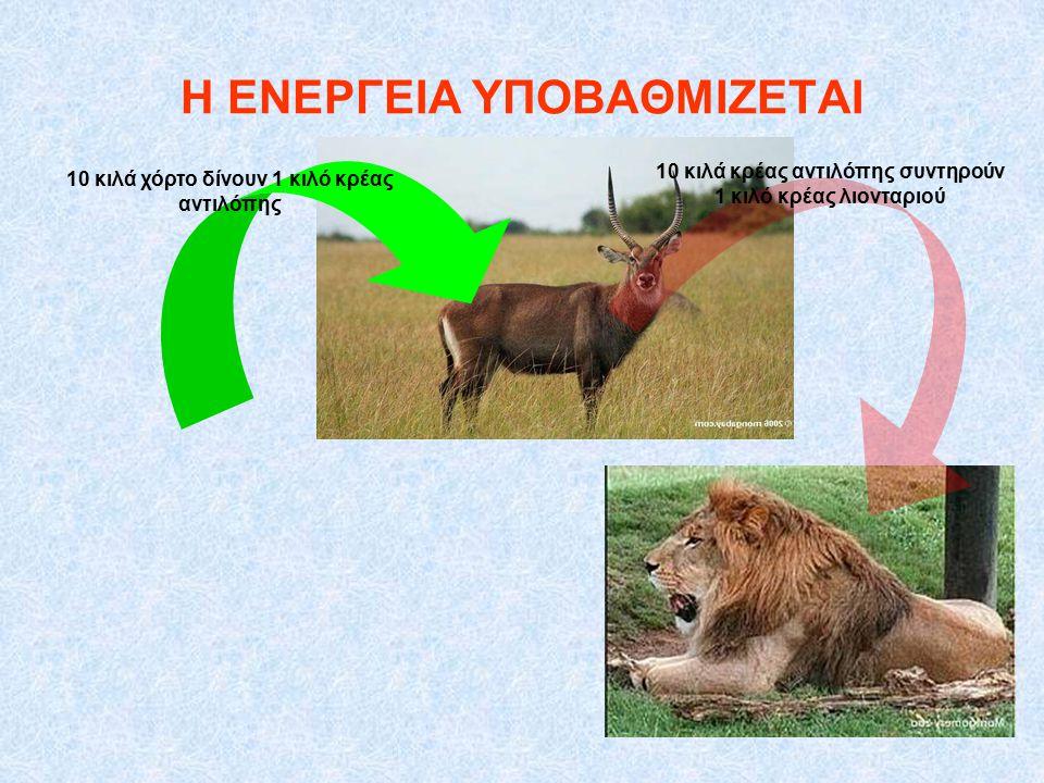 Η ΕΝΕΡΓΕΙΑ ΥΠΟΒΑΘΜΙΖΕΤΑΙ 10 κιλά χόρτο δίνουν 1 κιλό κρέας αντιλόπης 10 κιλά κρέας αντιλόπης συντηρούν 1 κιλό κρέας λιονταριού