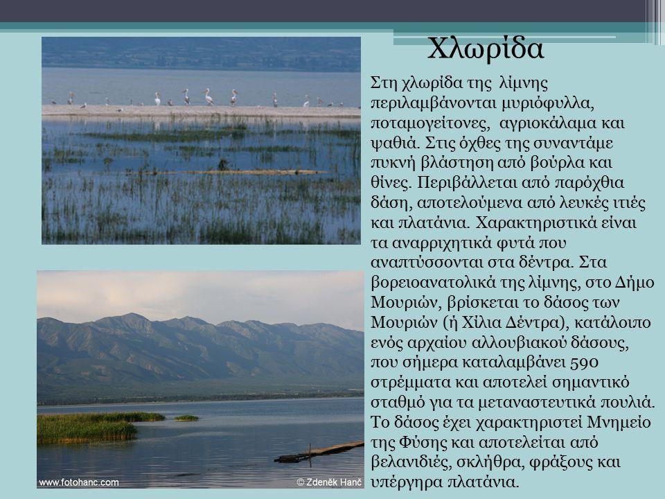 Στη χλωρίδα της λίμνης περιλαμβάνονται μυριόφυλλα, ποταμογείτονες, αγριοκάλαμα και ψαθιά.