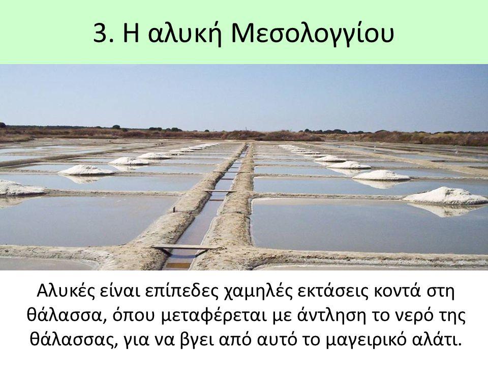 3. Η αλυκή Μεσολογγίου Αλυκές είναι επίπεδες χαμηλές εκτάσεις κοντά στη θάλασσα, όπου μεταφέρεται με άντληση το νερό της θάλασσας, για να βγει από αυτ