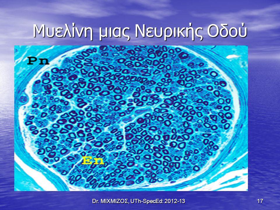 Μυελίνη μιας Νευρικής Οδού Dr. ΜΙΧΜΙΖΟΣ, UTh-SpecEd: 2012-13 17