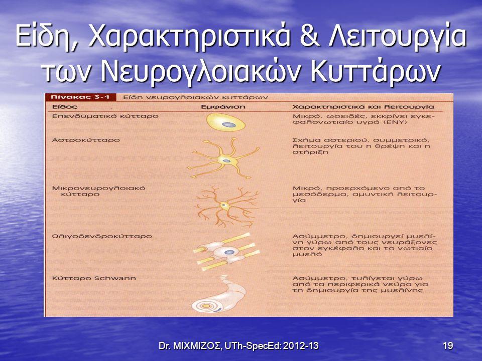 Είδη, Χαρακτηριστικά & Λειτουργία των Νευρογλοιακών Κυττάρων Dr. ΜΙΧΜΙΖΟΣ, UTh-SpecEd: 2012-13 19