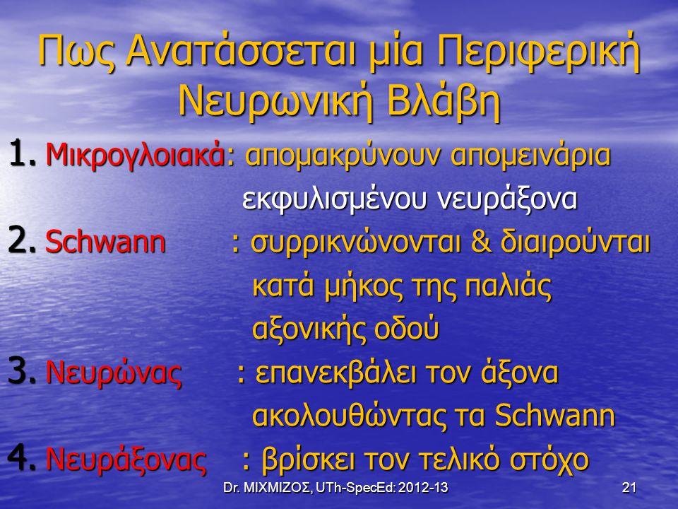 Πως Ανατάσσεται μία Περιφερική Νευρωνική Βλάβη 1. Μικρογλοιακά: απομακρύνουν απομεινάρια εκφυλισμένου νευράξονα εκφυλισμένου νευράξονα 2. Schwann : συ