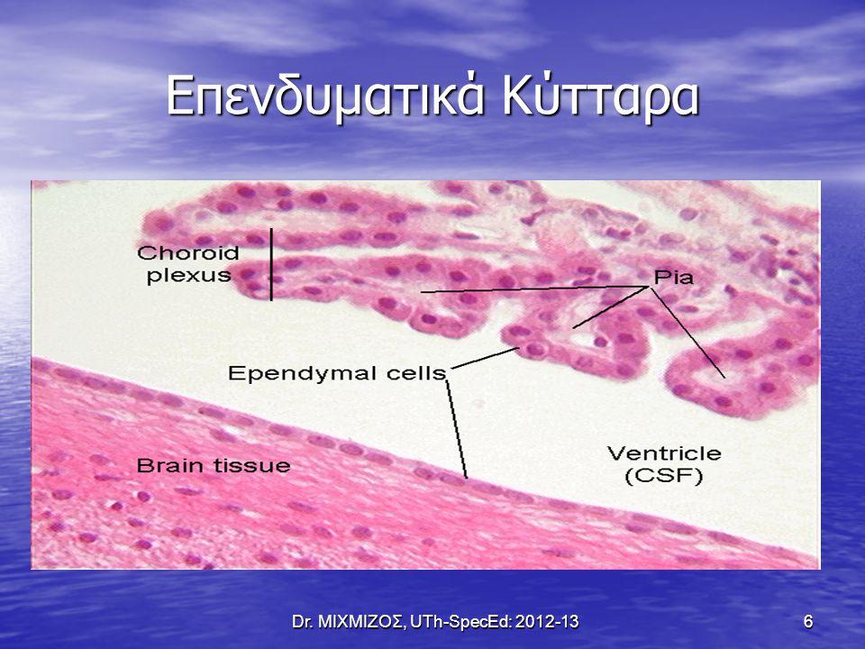 Επενδυματικά Κύτταρα Dr. ΜΙΧΜΙΖΟΣ, UTh-SpecEd: 2012-13 6