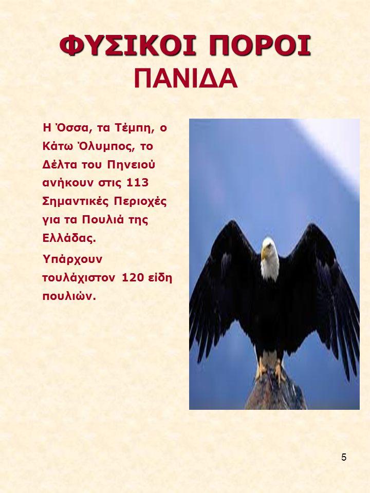 5 ΦΥΣΙΚΟΙ ΠΟΡΟΙ ΦΥΣΙΚΟΙ ΠΟΡΟΙ ΠΑΝΙΔΑ Η Όσσα, τα Τέµπη, ο Κάτω Όλυµπος, το Δέλτα του Πηνειού ανήκουν στις 113 Σηµαντικές Περιοχές για τα Πουλιά της Ελλάδας.