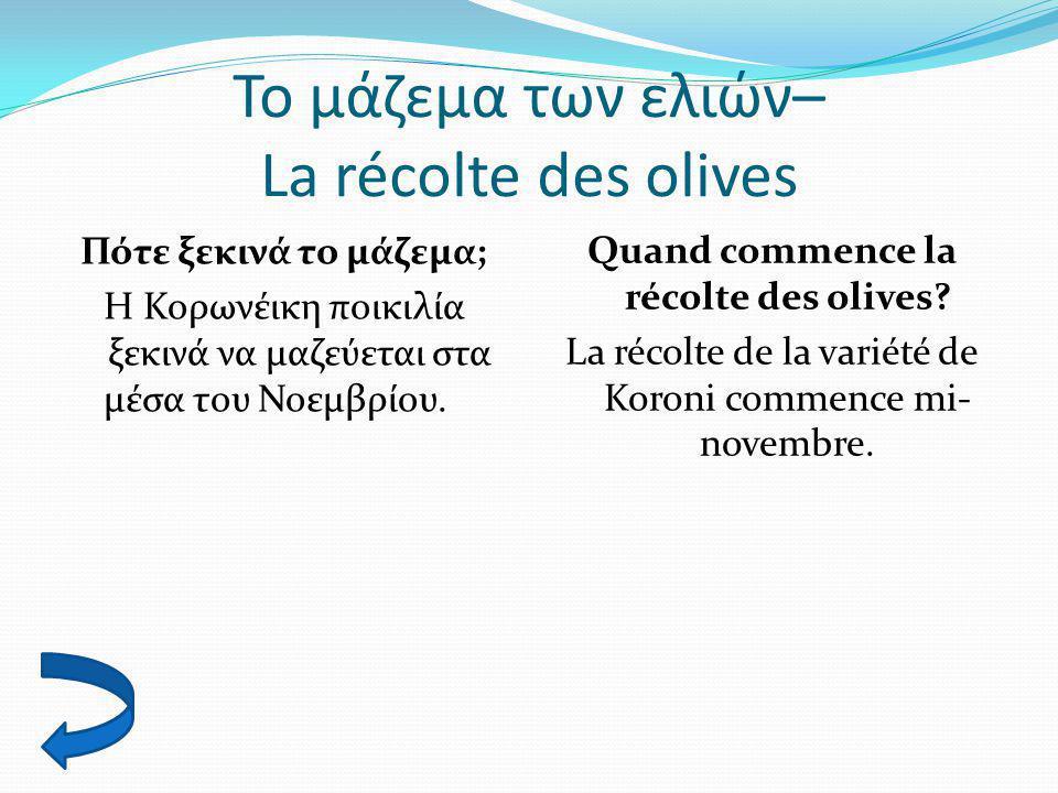 Το μάζεμα των ελιών– La récolte des olives Πότε ξεκινά το μάζεμα; Η Κορωνέικη ποικιλία ξεκινά να μαζεύεται στα μέσα του Νοεμβρίου. Quand commence la r