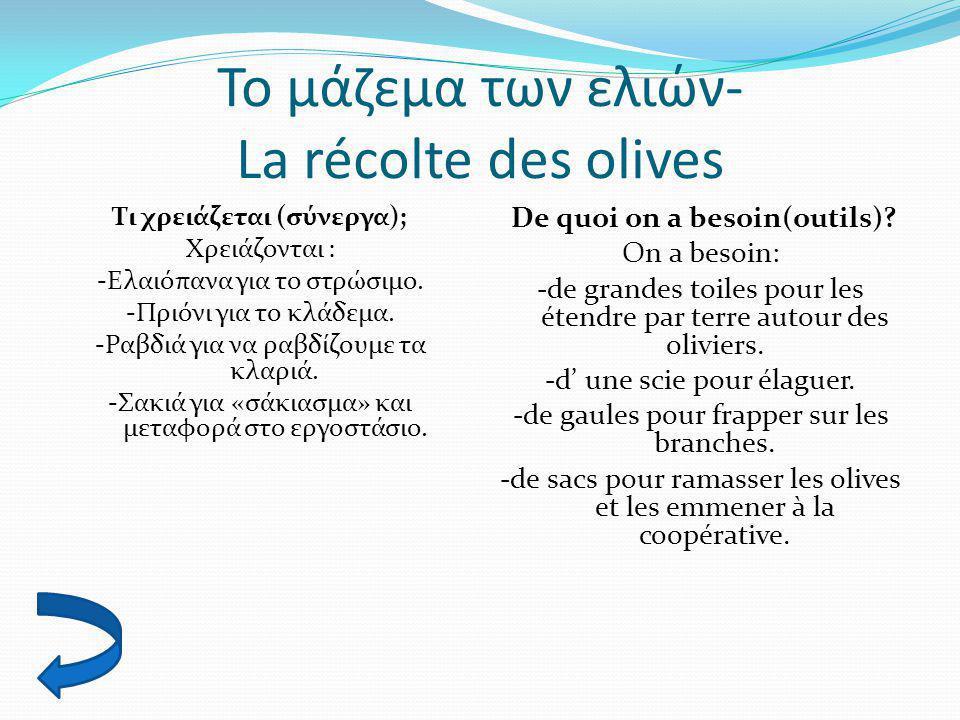 Το μάζεμα των ελιών- La récolte des olives Τι χρειάζεται (σύνεργα); Χρειάζονται : -Ελαιόπανα για το στρώσιμο. -Πριόνι για το κλάδεμα. -Ραβδιά για να ρ