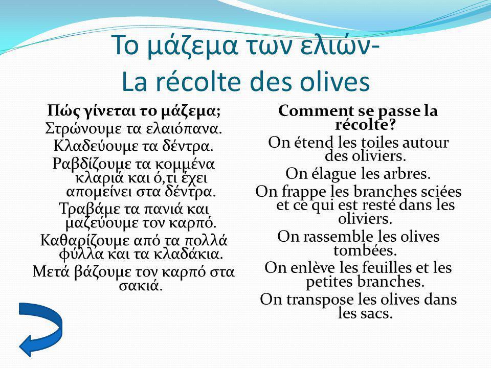 Το μάζεμα των ελιών- La récolte des olives Πώς γίνεται το μάζεμα; Στρώνουμε τα ελαιόπανα. Κλαδεύουμε τα δέντρα. Ραβδίζουμε τα κομμένα κλαριά και ό,τι