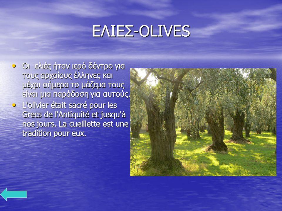 ΕΛΙΕΣ-OLIVES Οι ελιές ήταν ιερό δέντρο για τους αρχαίους έλληνες και μέχρι σήμερα το μάζεμα τους είναι μια παράδοση για αυτούς. Οι ελιές ήταν ιερό δέν
