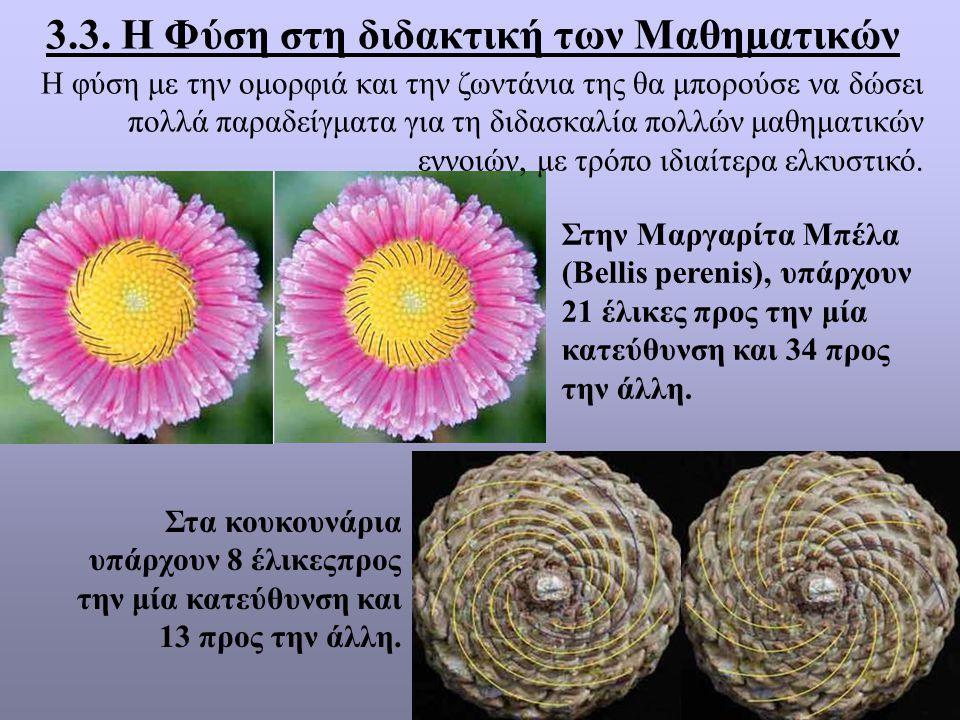 3.3. Η Φύση στη διδακτική των Μαθηματικών Στην Μαργαρίτα Μπέλα (Bellis perenis), υπάρχουν 21 έλικες προς την μία κατεύθυνση και 34 προς την άλλη. Στα
