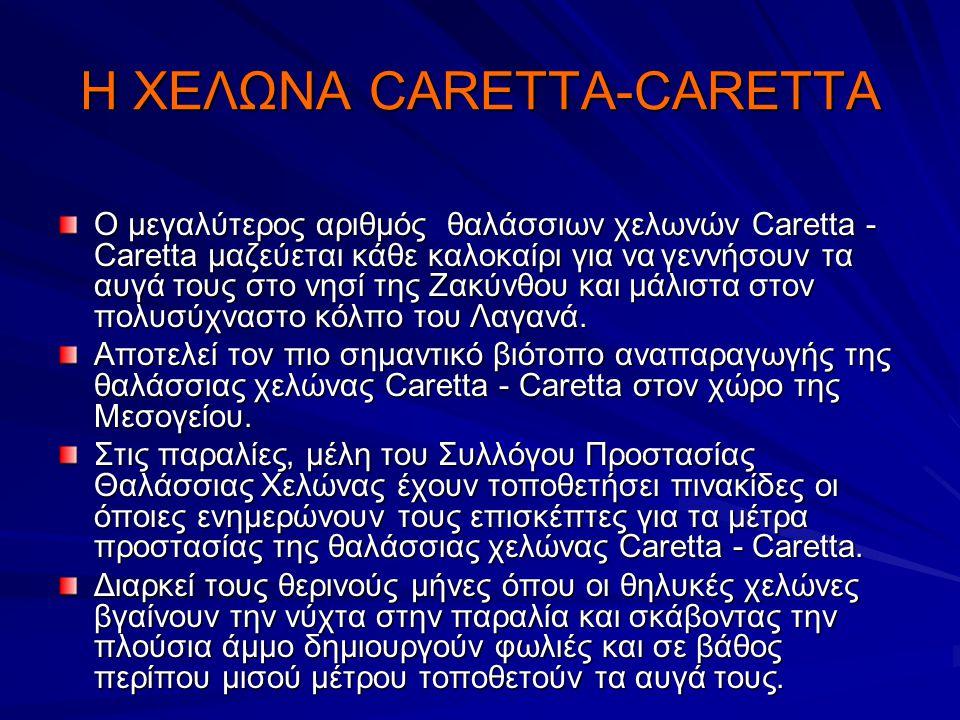 Η ΧΕΛΩΝΑ CARETTA-CARETTA Ο μεγαλύτερος αριθμός θαλάσσιων χελωνών Caretta - Caretta μαζεύεται κάθε καλοκαίρι για να γεννήσουν τα αυγά τους στο νησί της