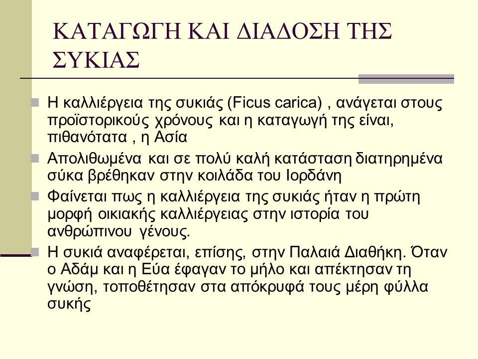 Η ΣΥΚΟΚΑΛΙΕΡΓΕΙΑ ΣΤΗΝ ΕΛΛΑΔΑ  Στην Ελλάδα, η συκιά ήρθε από την Καρία (από όπου πήρε και το όνομά της) και  Η τεχνική της καλλιέργειάς της, καταγράφηκε για πρώτη φορά από τον ποιητή Αρχίλοχο, γύρω στα 700 π.X.