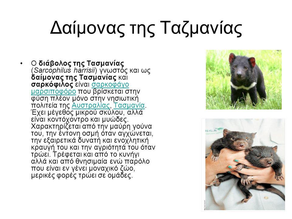 Δαίμονας της Ταζμανίας •Ο διάβολος της Τασμανίας (Sarcophilus harrisii) γνωστός και ως δαίμονας της Τασμανίας και σαρκόφιλος είναι σαρκοφάγο μαρσιποφό