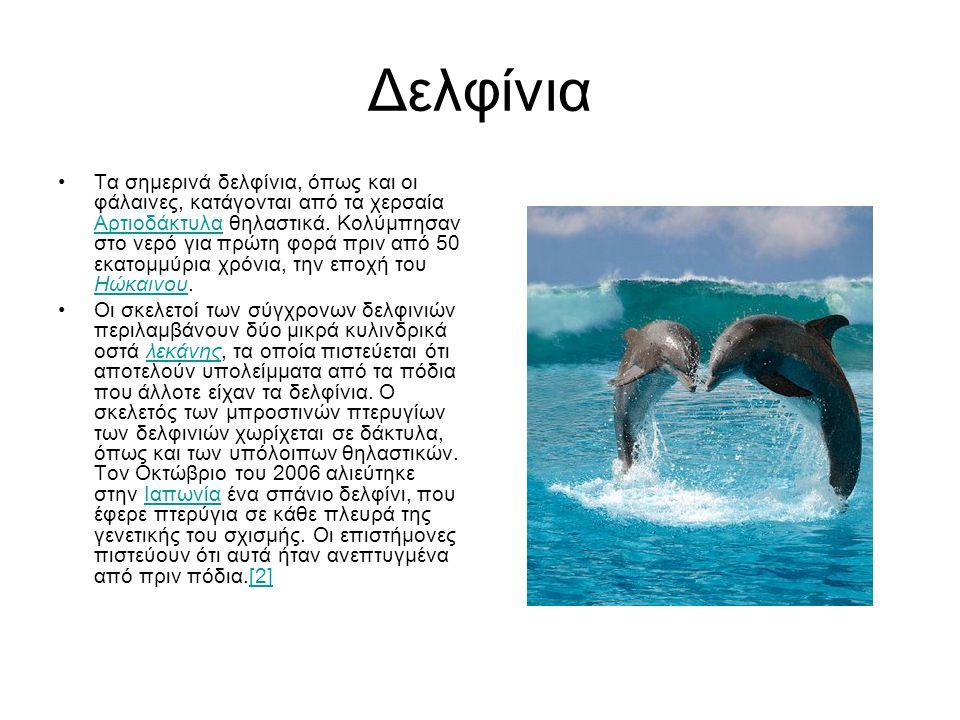 Δελφίνια •Τα σημερινά δελφίνια, όπως και οι φάλαινες, κατάγονται από τα χερσαία Αρτιοδάκτυλα θηλαστικά. Κολύμπησαν στο νερό για πρώτη φορά πριν από 50