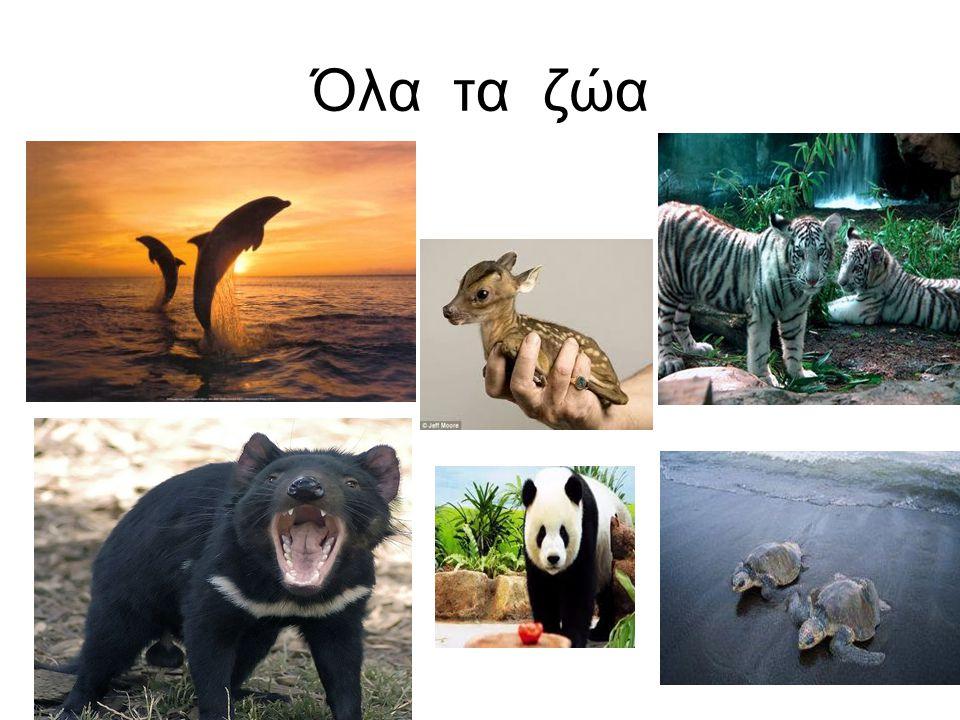 Όλα τα ζώα