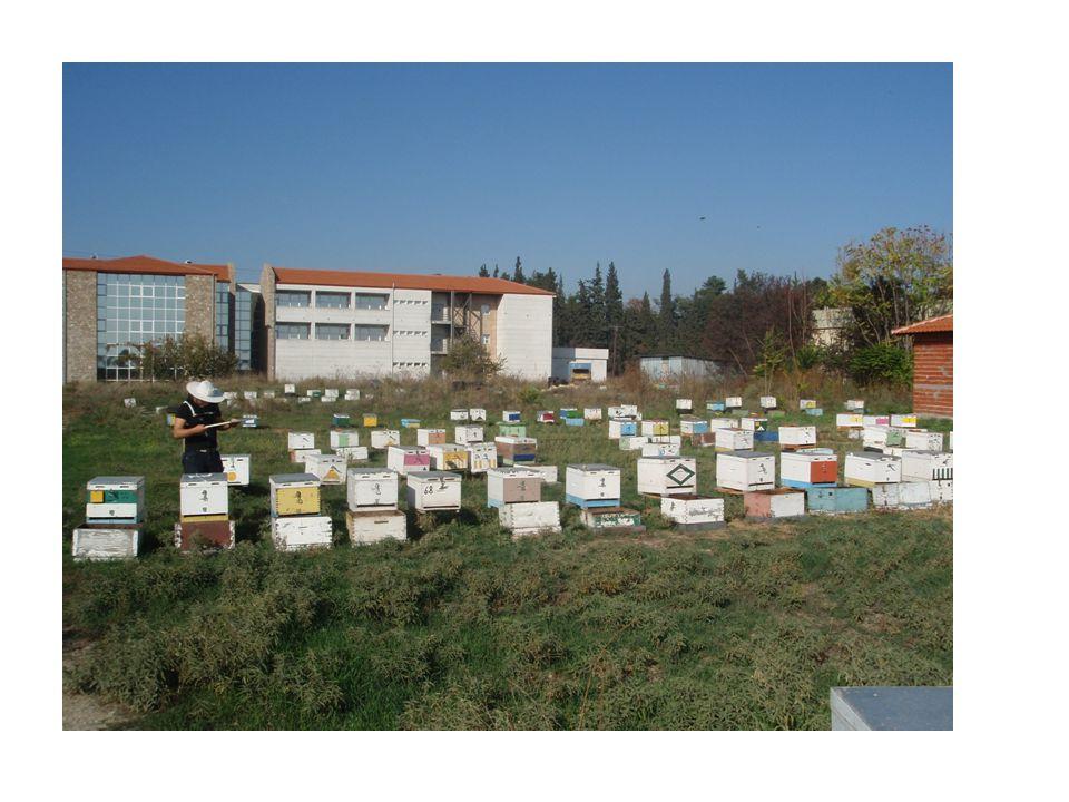 ΜΕΛΙΣΣΟΚΟΜΙΚΗ ΜΑΣΚΑ • Διαφόρων τύπων • Μελισσοστεγανό δίχτυ, δεν εμποδίζει την κίνηση και την παρατήρηση • Διευκολύνει τον αερισμό