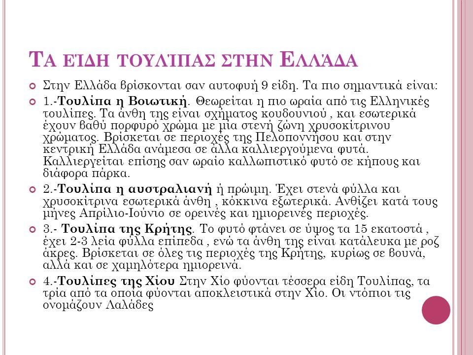 Τ Α ΕΊΔΗ ΤΟΥΛΊΠΑΣ ΣΤΗΝ Ε ΛΛΆΔΑ Στην Ελλάδα βρίσκονται σαν αυτοφυή 9 είδη. Τα πιο σημαντικά είναι: 1.- Τουλίπα η Βοιωτική. Θεωρείται η πιο ωραία από τι