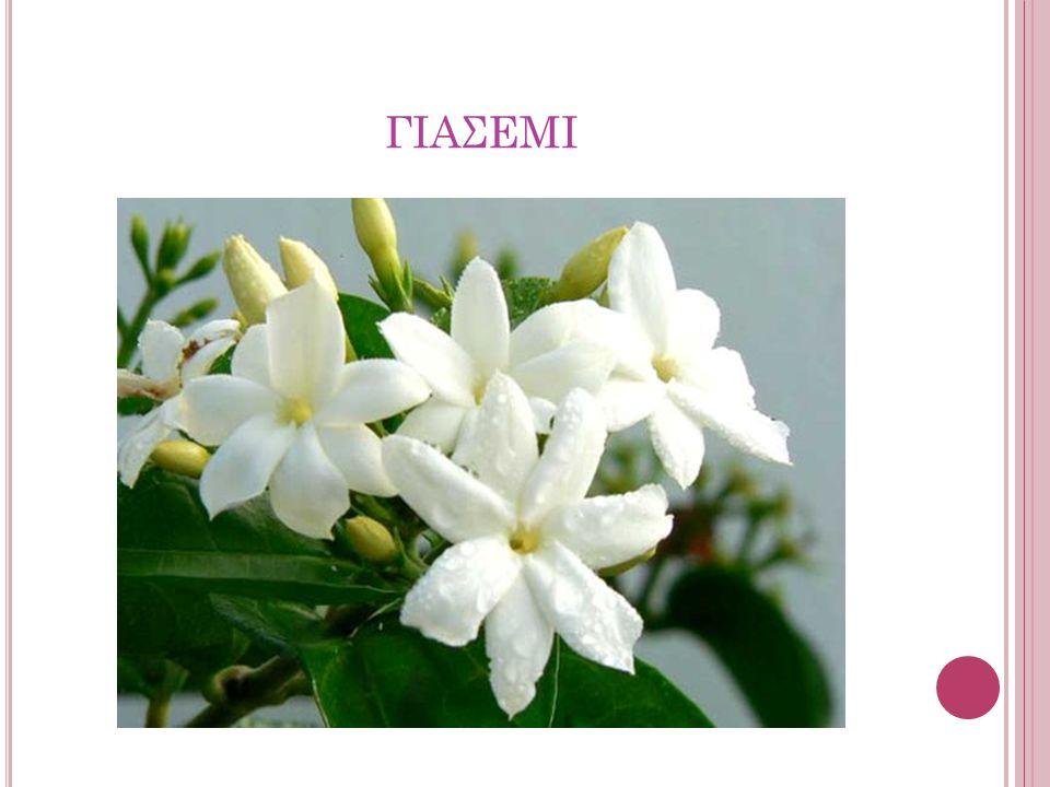 Το γιασεμί ή ίασμος είναι γένος αγγειόσπερμων, δικότυλων φυτών το οποίο ανήκει στην οικογένεια των Ελαιοειδών.