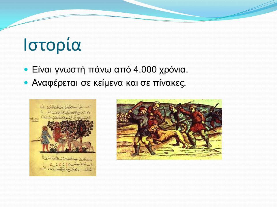 Ιστορία  Είναι γνωστή πάνω από 4.000 χρόνια.  Αναφέρεται σε κείμενα και σε πίνακες.