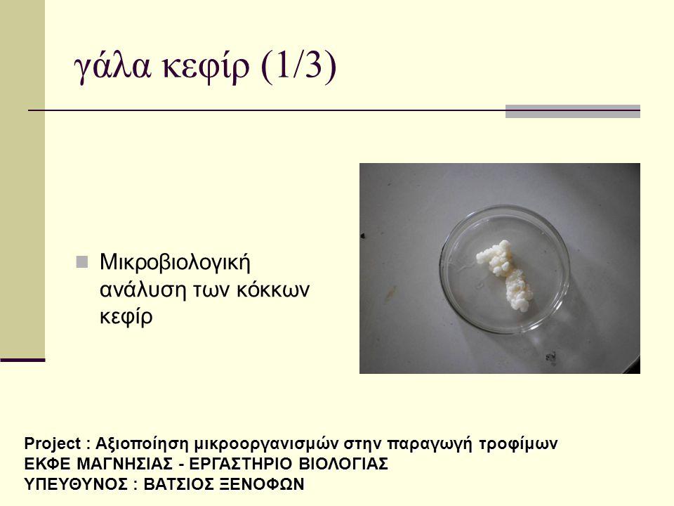 γάλα κεφίρ (1/3)  Μικροβιολογική ανάλυση των κόκκων κεφίρ Project : Αξιοποίηση μικροοργανισμών στην παραγωγή τροφίμων ΕΚΦΕ ΜΑΓΝΗΣΙΑΣ - ΕΡΓΑΣΤΗΡΙΟ ΒΙΟ