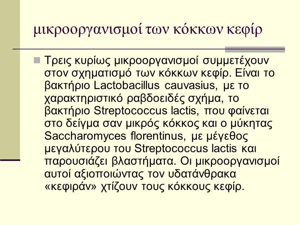μικροοργανισμοί των κόκκων κεφίρ  Τρεις κυρίως μικροοργανισμοί συμμετέχουν στον σχηματισμό των κόκκων κεφίρ. Είναι το βακτήριο Lactobacillus cauvasiu