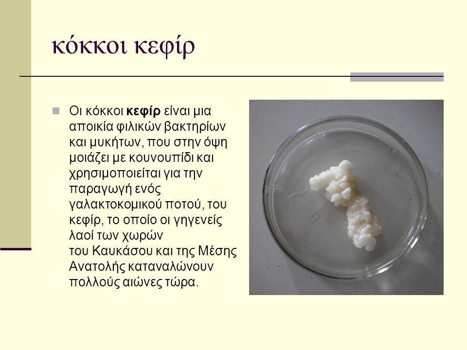 κόκκοι κεφίρ  Οι κόκκοι κεφίρ είναι μια αποικία φιλικών βακτηρίων και μυκήτων, που στην όψη μοιάζει με κουνουπίδι και χρησιμοποιείται για την παραγωγ