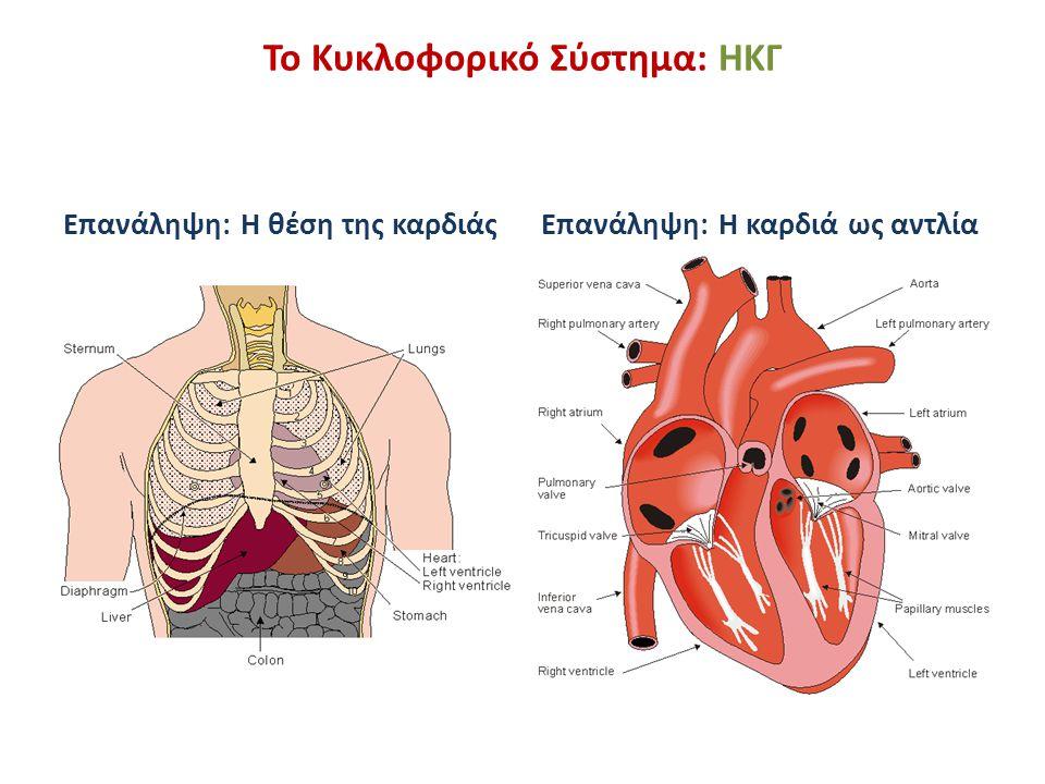 Το Κυκλοφορικό Σύστημα: ΗΚΓ Επανάληψη: Η θέση της καρδιάςΕπανάληψη: Η καρδιά ως αντλία