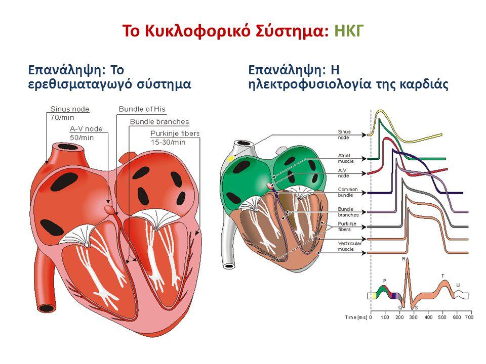 Το Κυκλοφορικό Σύστημα: ΗΚΓ Επανάληψη: Ισόχρονες επιφάνειες που περιγράφουν την εξέλιξη της διέγερσης του μυοκαρδίου