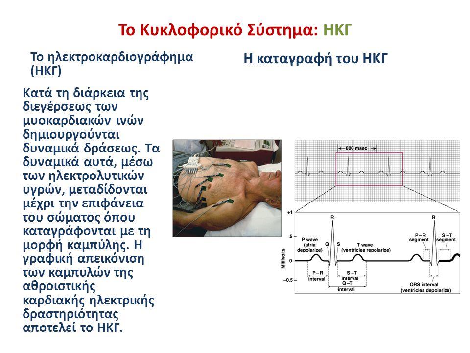 Το Κυκλοφορικό Σύστημα: ΗΚΓ Το ηλεκτροκαρδιογράφημα (ΗΚΓ) Κατά τη διάρκεια της διεγέρσεως των μυοκαρδιακών ινών δημιουργούνται δυναμικά δράσεως. Τα δυ