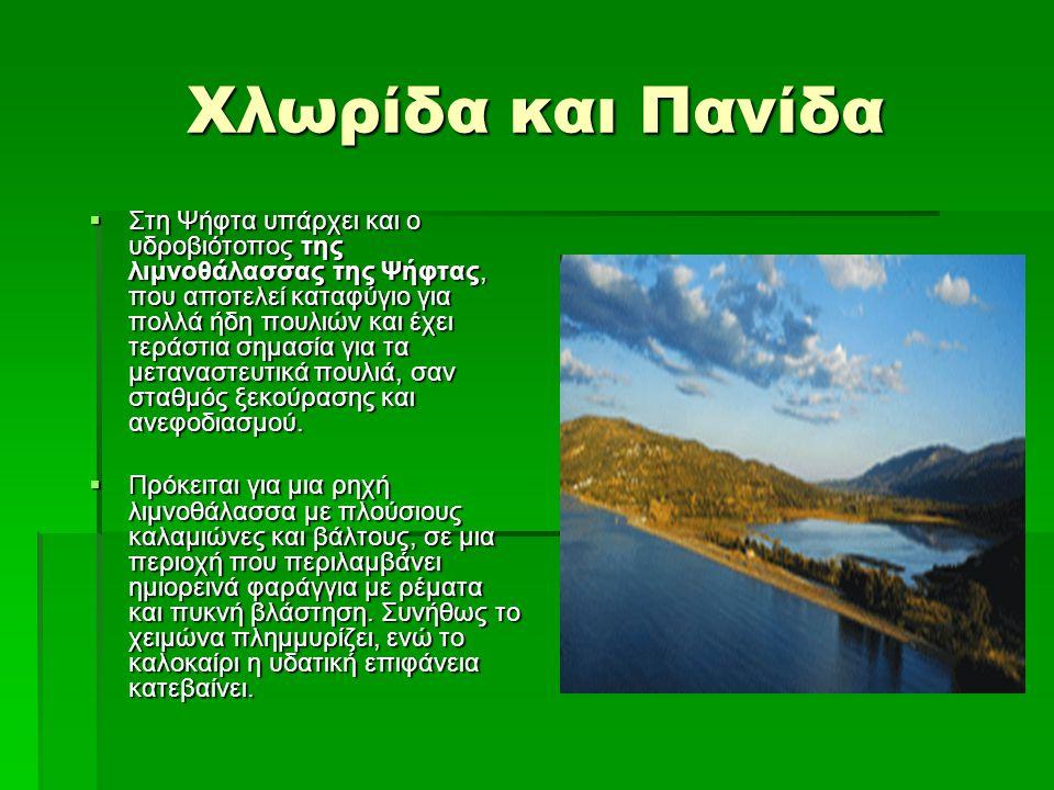 Χλωρίδα και Πανίδα  Στη Ψήφτα υπάρχει και ο υδροβιότοπος της λιμνοθάλασσας της Ψήφτας, που αποτελεί καταφύγιο για πολλά ήδη πουλιών και έχει τεράστια