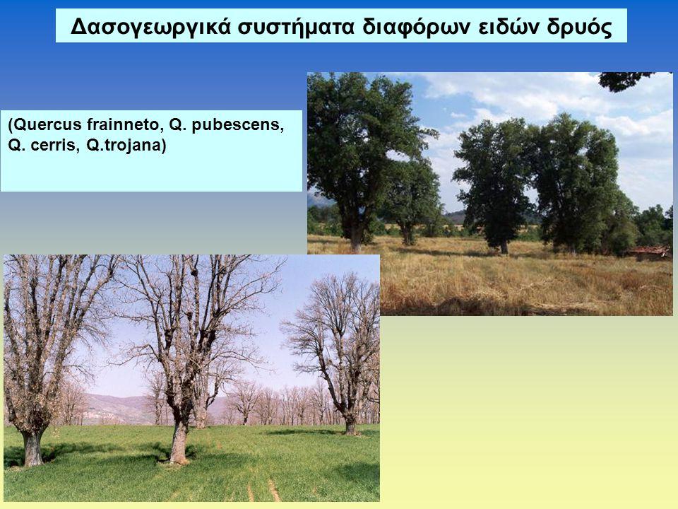 Δασογεωργικά συστήματα διαφόρων ειδών δρυός (Quercus frainneto, Q. pubescens, Q. cerris, Q.trojana)