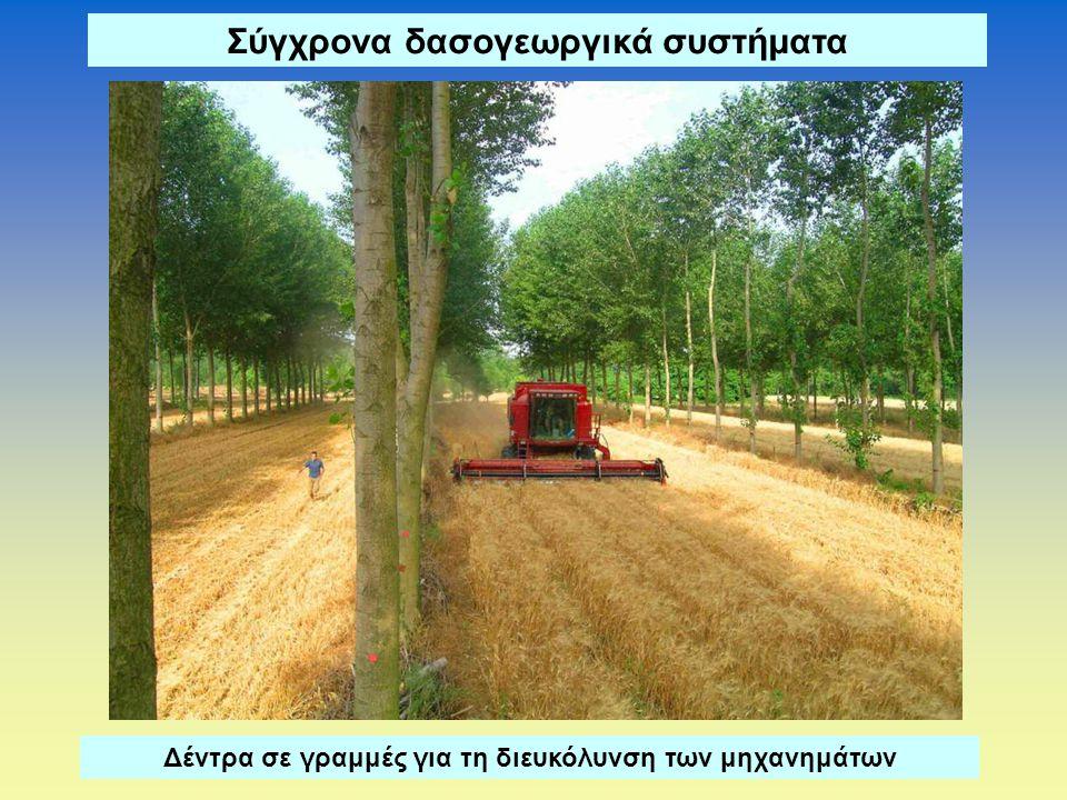 Σύγχρονα δασογεωργικά συστήματα Δέντρα σε γραμμές για τη διευκόλυνση των μηχανημάτων
