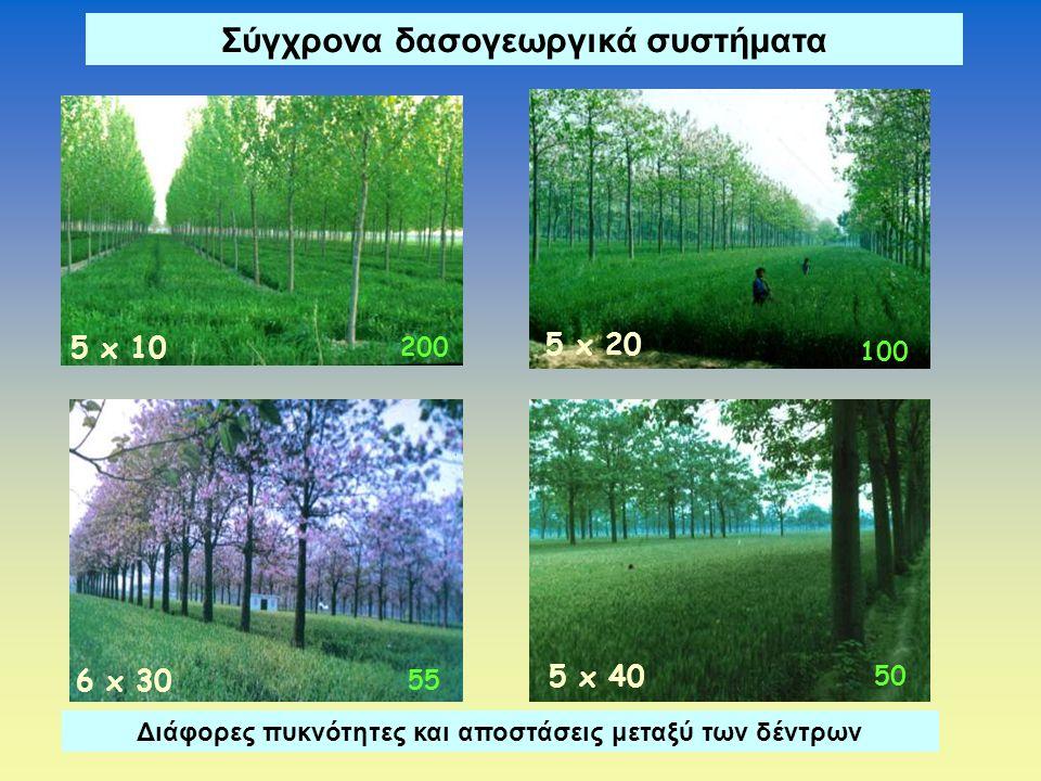 Σύγχρονα δασογεωργικά συστήματα 55 6 x 30 5 x 10 200 5 x 40 50 5 x 20 100 Διάφορες πυκνότητες και αποστάσεις μεταξύ των δέντρων