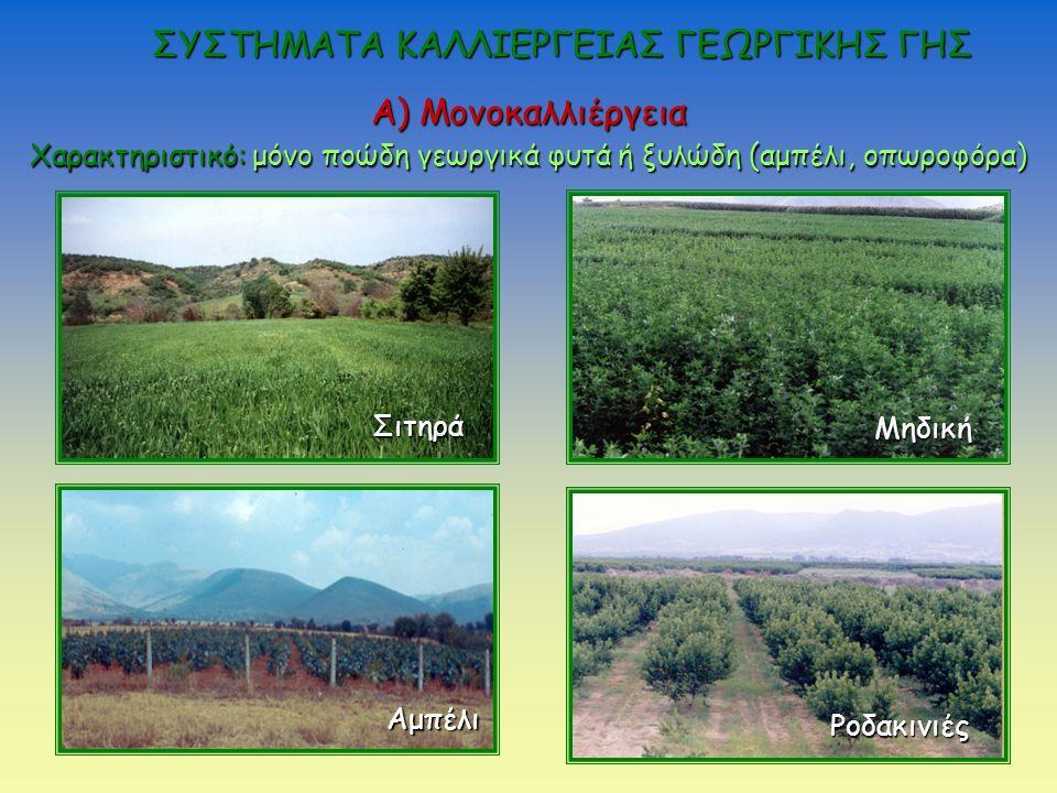 Α) Μονοκαλλιέργεια Χαρακτηριστικό: μόνο ποώδη γεωργικά φυτά ή ξυλώδη (αμπέλι, οπωροφόρα) Σιτηρά Μηδική Αμπέλι Ροδακινιές ΣΥΣΤΗΜΑΤΑ ΚΑΛΛΙΕΡΓΕΙΑΣ ΓΕΩΡΓΙΚΗΣ ΓΗΣ