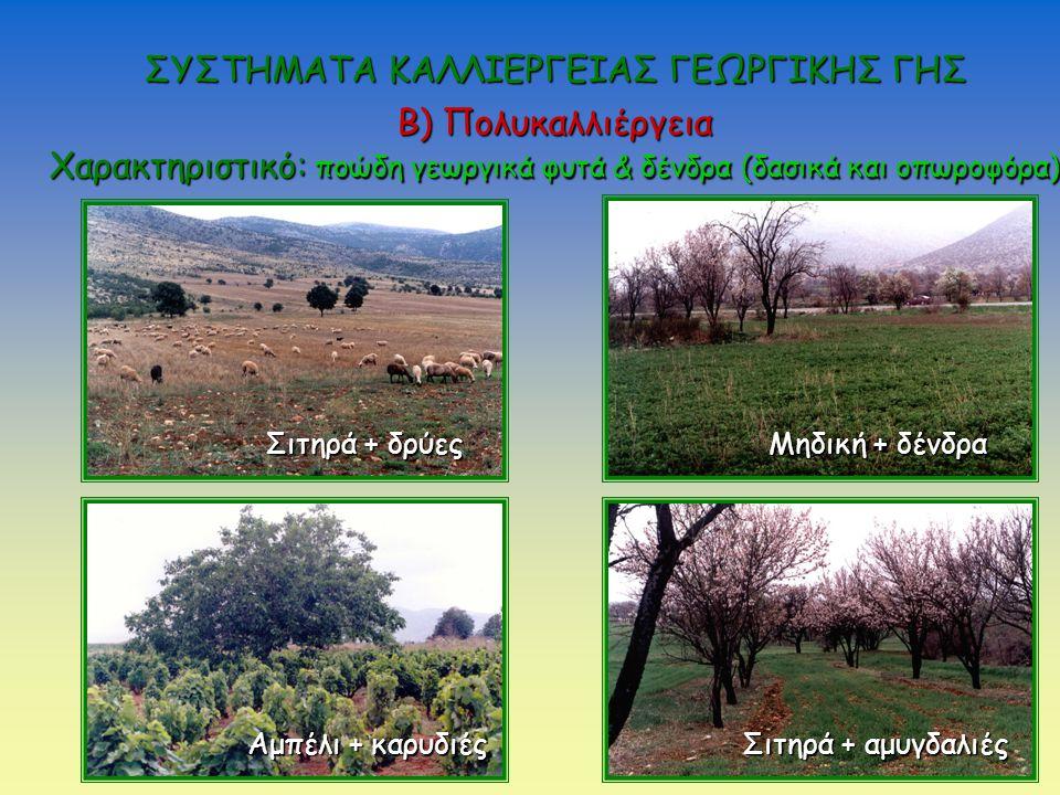 Σιτηρά + δρύες Μηδική + δένδρα Αμπέλι + καρυδιές Σιτηρά + αμυγδαλιές Β) Πολυκαλλιέργεια Χαρακτηριστικό: ποώδη γεωργικά φυτά & δένδρα (δασικά και οπωροφόρα) ΣΥΣΤΗΜΑΤΑ ΚΑΛΛΙΕΡΓΕΙΑΣ ΓΕΩΡΓΙΚΗΣ ΓΗΣ