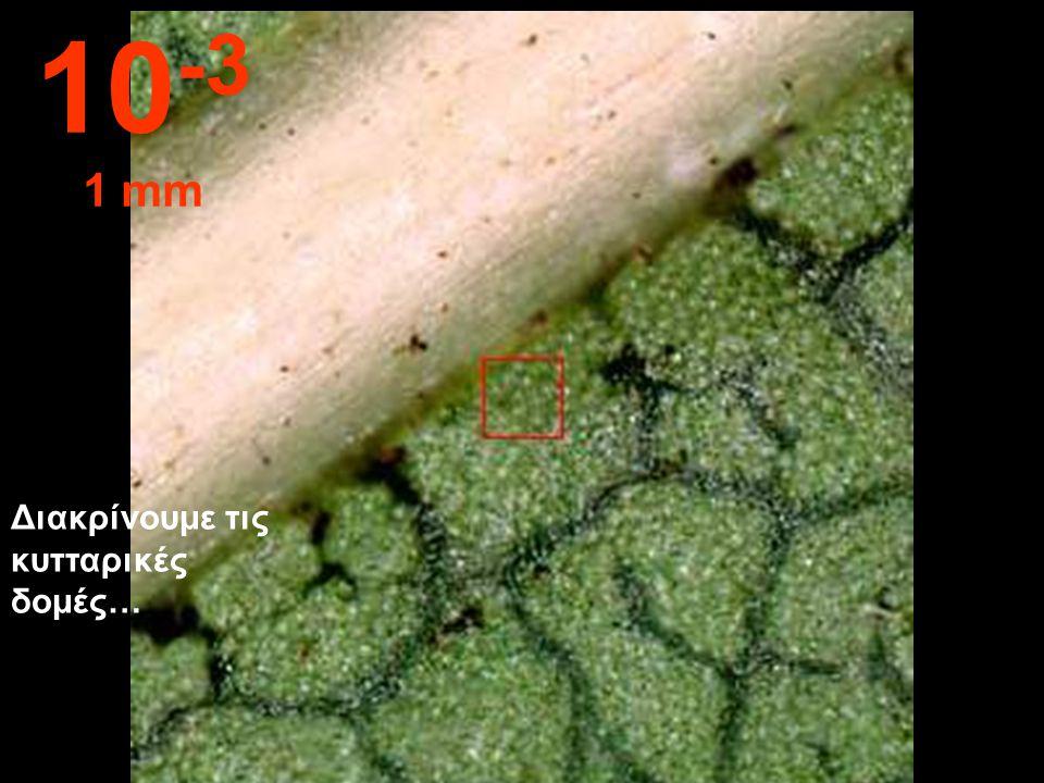 Διακρίνουμε τις δομές του φύλλου 10 -2 1 cm