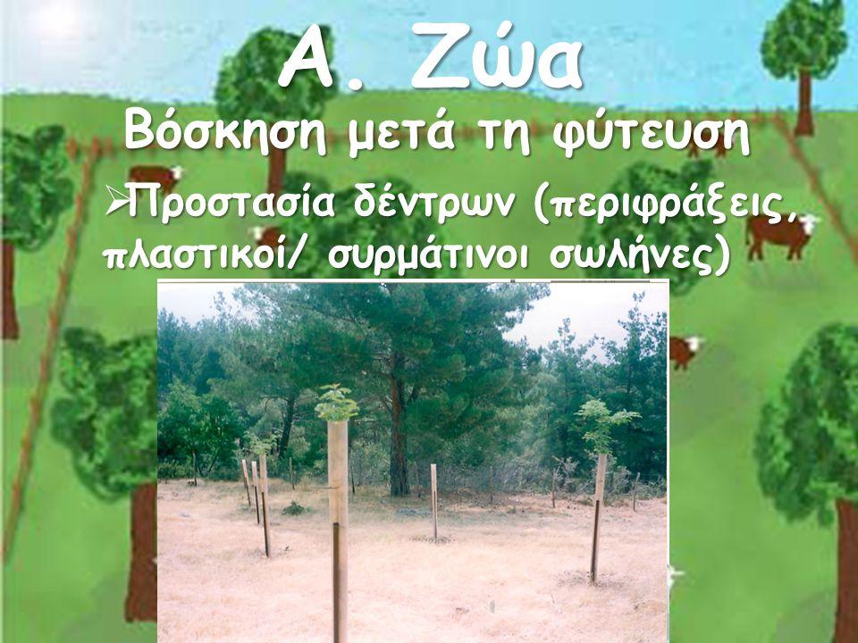 Α. Ζώα Βόσκηση μετά τη φύτευση  Προστασία δέντρων (περιφράξεις, πλαστικοί/ συρμάτινοι σωλήνες)