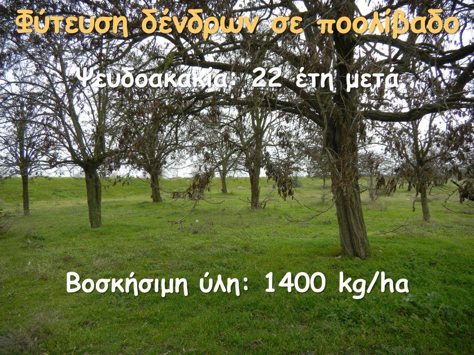 Φύτευση δένδρων σε ποολίβαδο Ψευδοακακία: 22 έτη μετά