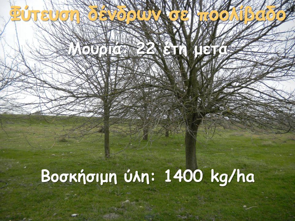 Φύτευση δένδρων σε ποολίβαδο Βοσκήσιμη ύλη: 1400 kg/ha Μουριά: 22 έτη μετά