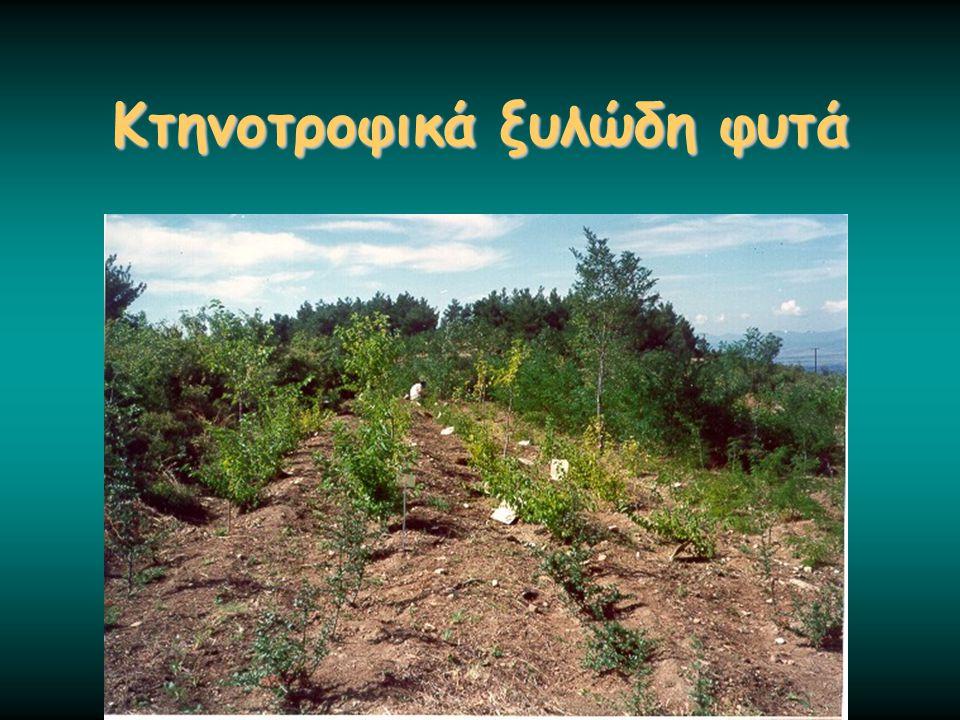 Κτηνοτροφικά ξυλώδη φυτά