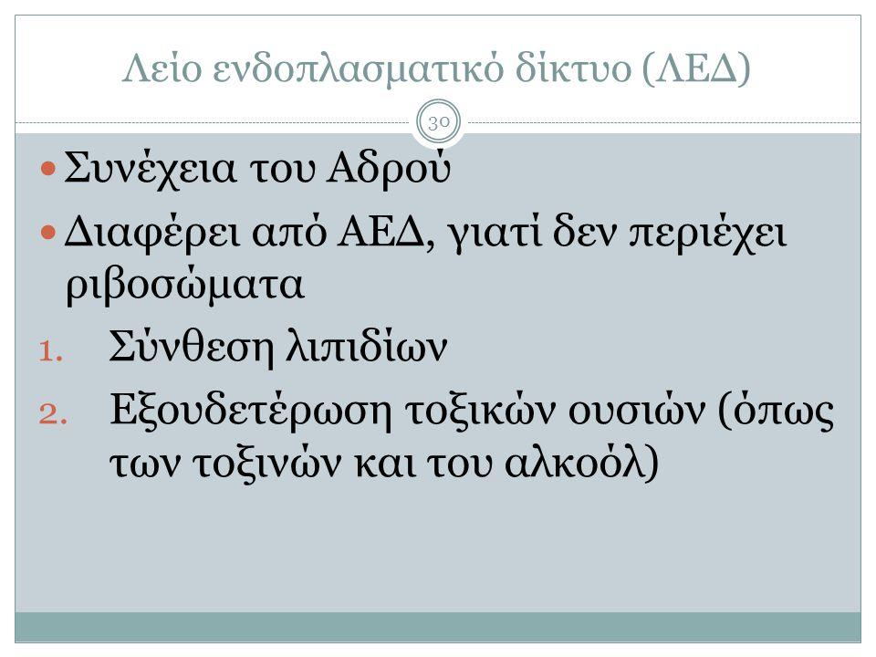 Λείο ενδοπλασματικό δίκτυο (ΛΕΔ) 30  Συνέχεια του Αδρού  Διαφέρει από ΑΕΔ, γιατί δεν περιέχει ριβοσώματα 1.