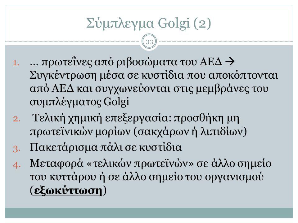 Σύμπλεγμα Golgi (2) 33 1.