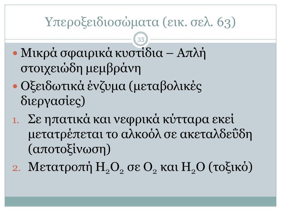 Υπεροξειδιοσώματα (εικ. σελ. 63) 35  Μικρά σφαιρικά κυστίδια – Απλή στοιχειώδη μεμβράνη  Οξειδωτικά ένζυμα (μεταβολικές διεργασίες) 1. Σε ηπατικά κα