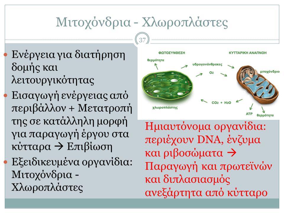 Μιτοχόνδρια - Χλωροπλάστες 37  Ενέργεια για διατήρηση δομής και λειτουργικότητας  Εισαγωγή ενέργειας από περιβάλλον + Μετατροπή της σε κατάλληλη μορφή για παραγωγή έργου στα κύτταρα  Επιβίωση  Εξειδικευμένα οργανίδια: Μιτοχόνδρια - Χλωροπλάστες Ημιαυτόνομα οργανίδια: περιέχουν DNA, ένζυμα και ριβοσώματα  Παραγωγή και πρωτεϊνών και διπλασιασμός ανεξάρτητα από κύτταρο