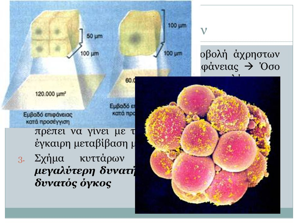 Μέγεθος κυττάρων 4 1. Εισαγωγή χρήσιμων ουσιών + Αποβολή άχρηστων ουσιών: Μέσω της εξωτερικής επιφάνειας  Όσο μεγαλύτερη η επιφάνεια, τόσο μεγαλύτερη