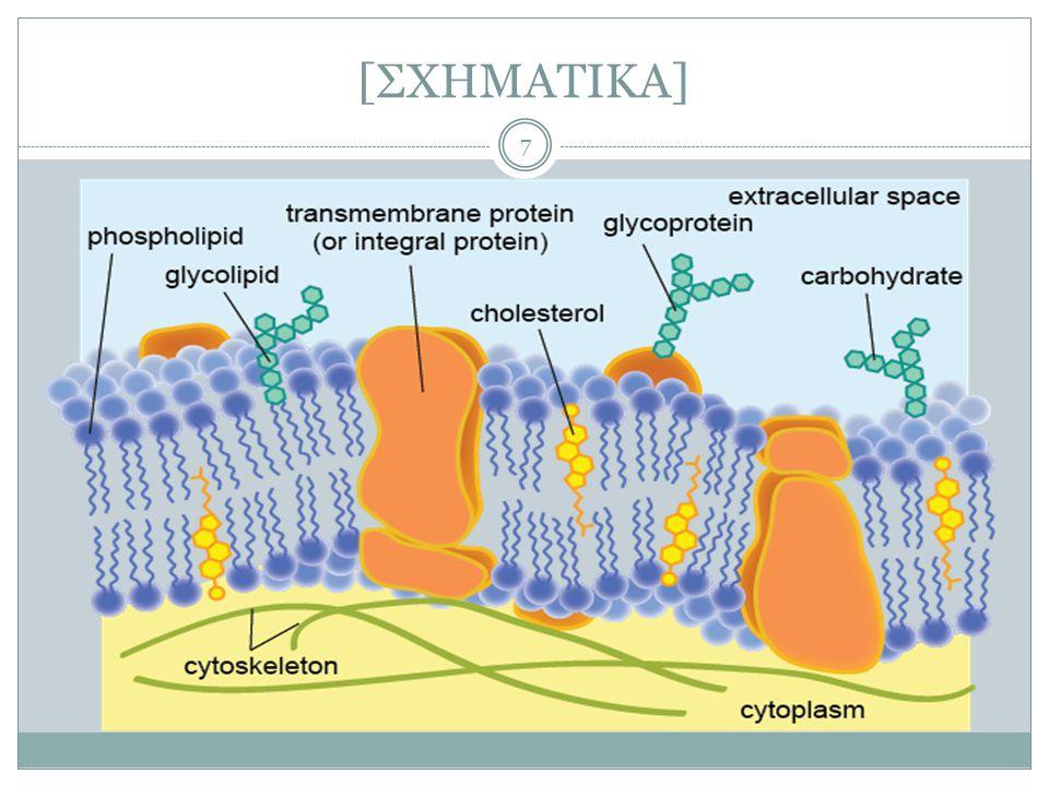Πλασματική μεμβράνη ως δέκτης μηνυμάτων 18  Ανάμεσα σε κύτταρα και το περιβάλλον τους (άλλα κύτταρα ή το μεσοκυττάριο ή τη μεσοκυττάρια ουσία): διαρκής ανταλλαγή μηνυμάτων ώστε: 1.