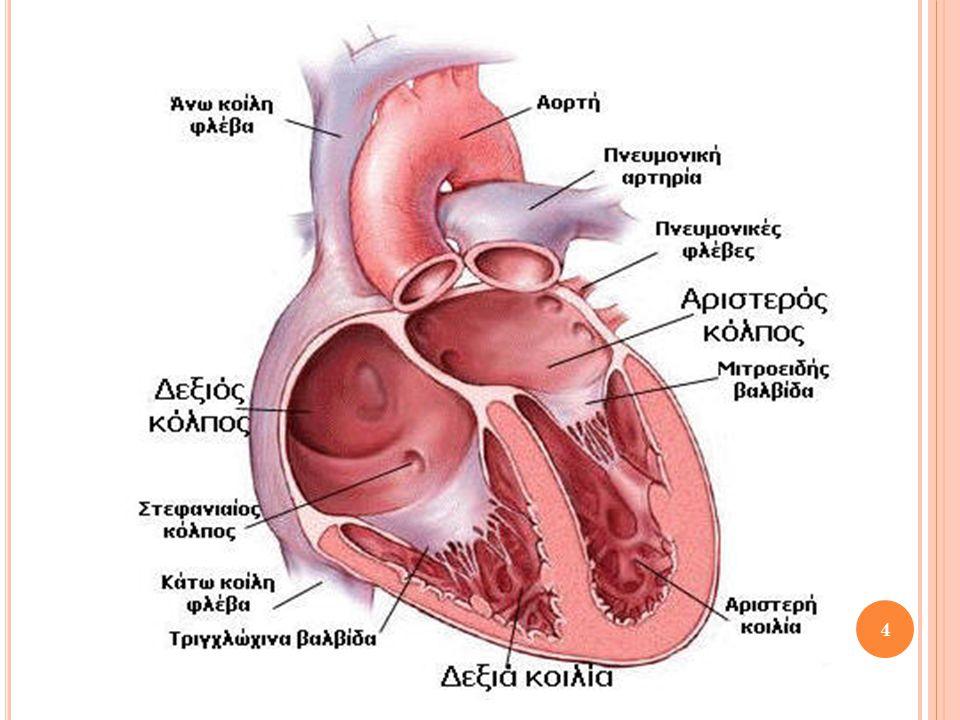 Δ ΟΜΗ Κ ΑΡΔΙΑΣ Τετράχωρη καρδιά 2 κόλποι με λεπτά τοιχώματα στο ανώτερο τμήμα – 2 κοιλίες με παχύτερα (γιατί στέλνει το αίμα σε όλο το σώμα) στο κατώτερο Διαχωρισμός κοιλιών με μεσοκοιλιακό διάφραγμα και κόλπων με το μεσοκολπικό  Άρα καμία επικοινωνία κοιλιών και κόλπων μεταξύ τους Μεταξύ κόλπων/κοιλιών: Βαλβίδες που καθορίζουν τη μονόδρομη ροή αίματος σε κάθε σύσπαση της καρδιάς 5
