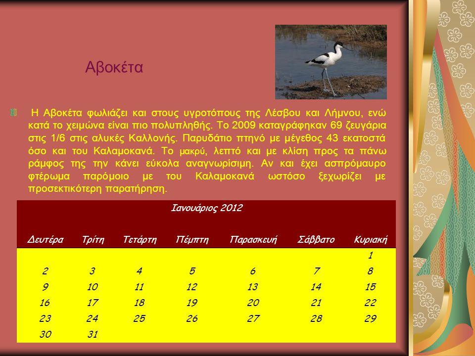 Η Αβοκέτα φωλιάζει και στους υγροτόπους της Λέσβου και Λήμνου, ενώ κατά το χειμώνα είναι πιο πολυπληθής.