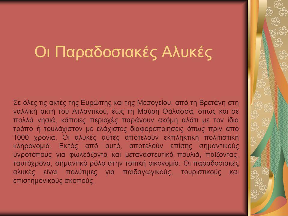 Ο μεγαλύτερος γλάρος της Ελλάδας.
