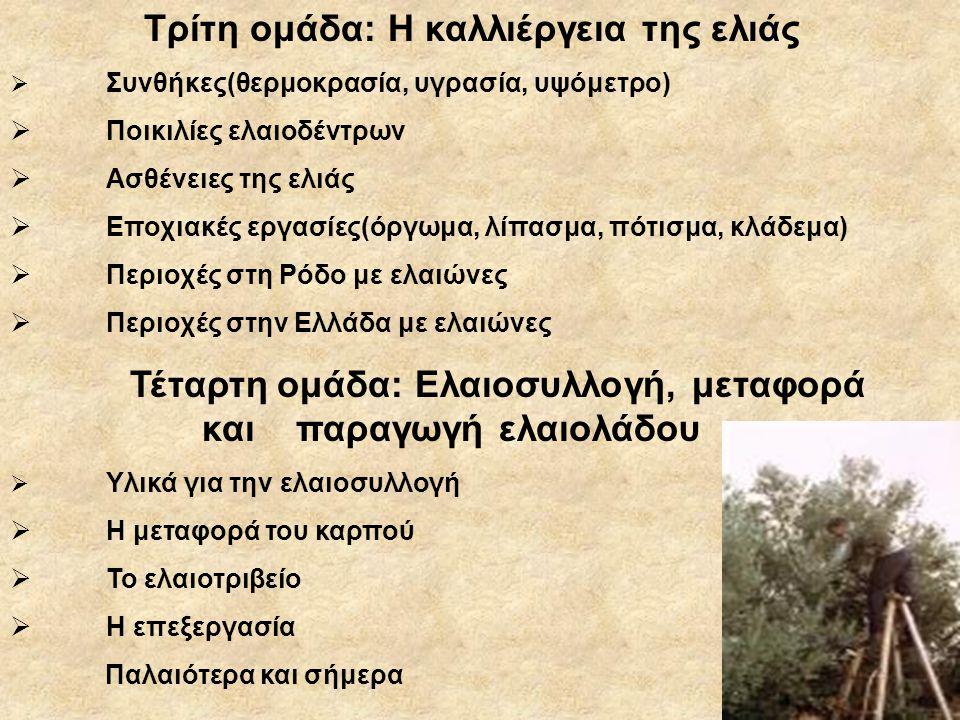 Τρίτη ομάδα: Η καλλιέργεια της ελιάς  Συνθήκες(θερμοκρασία, υγρασία, υψόμετρο)  Ποικιλίες ελαιοδέντρων  Ασθένειες της ελιάς  Εποχιακές εργασίες(όργωμα, λίπασμα, πότισμα, κλάδεμα)  Περιοχές στη Ρόδο με ελαιώνες  Περιοχές στην Ελλάδα με ελαιώνες Τέταρτη ομάδα: Ελαιοσυλλογή, μεταφορά και παραγωγή ελαιολάδου  Υλικά για την ελαιοσυλλογή  Η μεταφορά του καρπού  Το ελαιοτριβείο  Η επεξεργασία Παλαιότερα και σήμερα