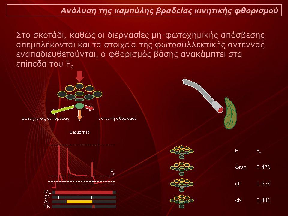 Ανάλυση της καμπύλης βραδείας κινητικής φθορισμού Στο σκοτάδι, καθώς οι διεργασίες μη-φωτοχημικής απόσβεσης απεμπλέκονται και τα στοιχεία της φωτοσυλλεκτικής αντέννας εναπαδιευθετούνται, ο φθορισμός βάσης ανακάμπτει στα επίπεδα του F o